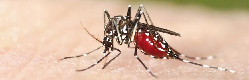 Zanzara tigre sintomi